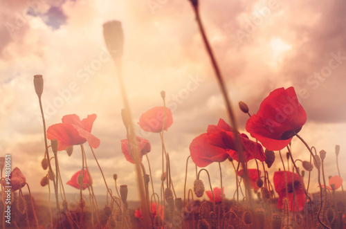 Poster de jardin Poppy poppies