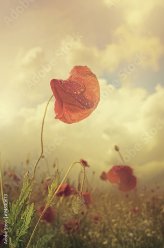 In de dag Poppy Poppy