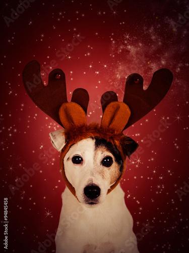 Pinturas sobre lienzo  Christmas dog background.