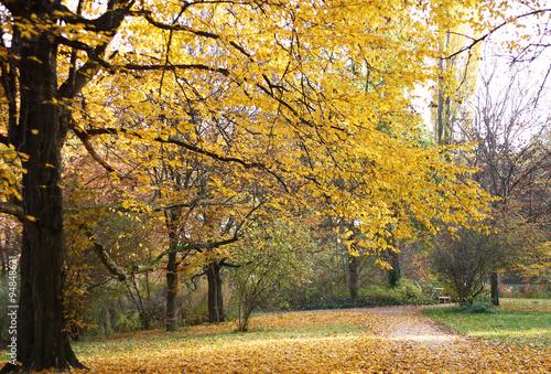 Canvas Prints Honey Herbstbäume