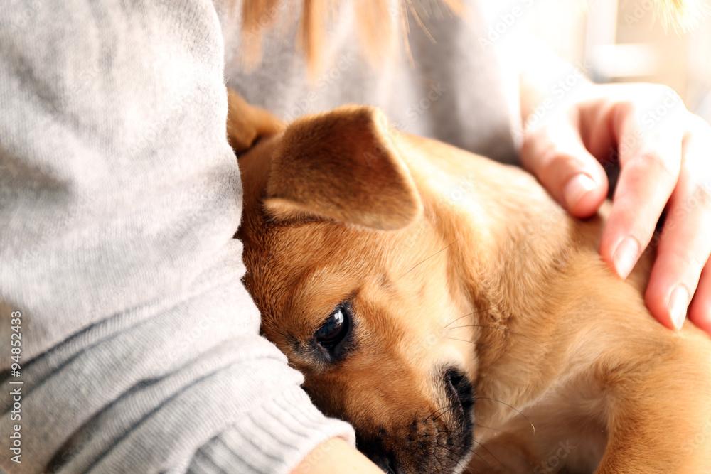 Fototapety, obrazy: Woman holding puppy closeup