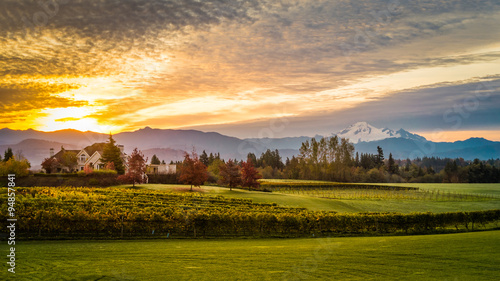 Foto auf AluDibond Melone Sunrise over Mount Baker and a vineyard in the Fraser Valley of British Columbia