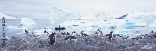 Fotobehang Antarctica Panoramic view of Gentoo penguins with chicks (Pygoscelis papua), glaciers and icebergs in Paradise Harbor, Antarctica
