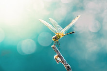 Beautiful Dragonfly And Blur B...
