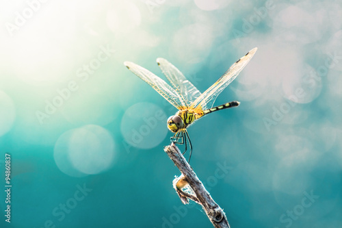 Beautiful dragonfly and blur bokeh background