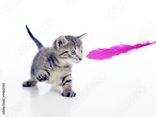 Gatito jugando con pluma de color fucsia - Buy this stock photo and ...