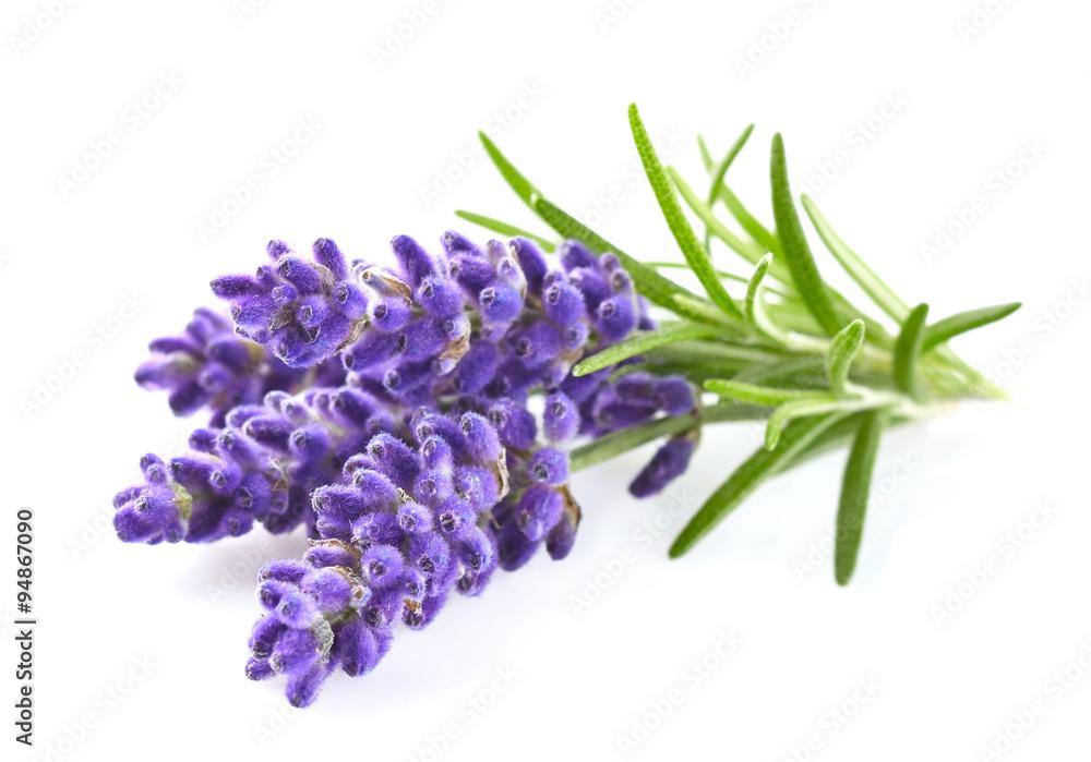 Fototapety, obrazy: Lavender