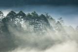 Sosnowy las na wysokiej górze - 94871875