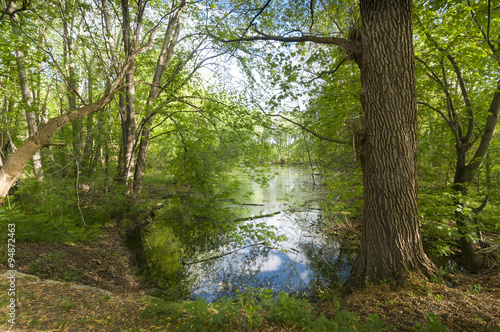 Wall Murals Khaki Woods and water