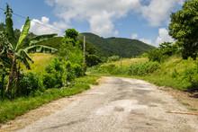 Jungle Cuba