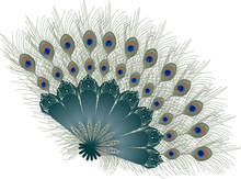 Peacock Feather Fan Isolated O...