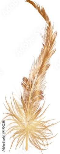 single long brown feather isolated on white