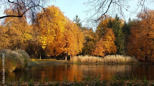 Lazienki park in Warsaw during autumn - 94903867