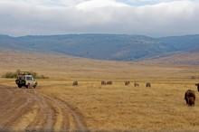 Landscape Of Ngorongoro Conser...