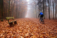Wooden Bench In The Foggy Forest In Luxembourg