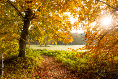 Foto op Canvas Herfst Forest in Autumn