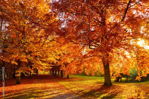 Fototapeta Herbst obraz na płótnie