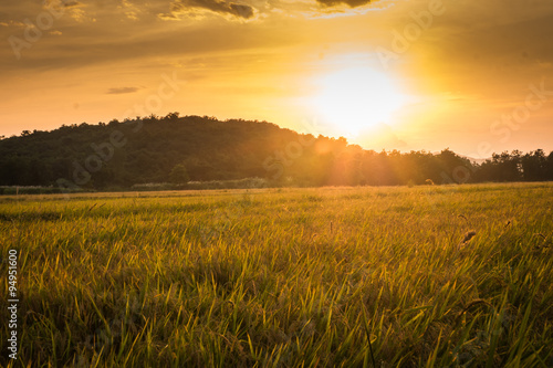 Canvas Prints Culture rice fields before sunset