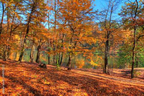 Fototapety, obrazy: Forest along Lake in the autumn, HDR image