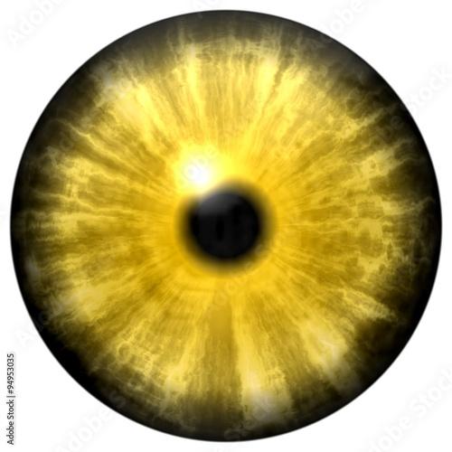 Fotografía  Yellow animal eye with small pupil and black retina