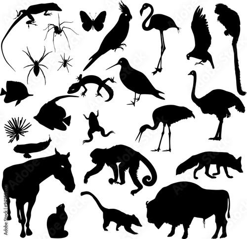 Vászonkép  Set of animal silhouettes