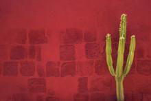 Green Cactus Over Red Wall, Santa Catalina Monastery, Arequipa,