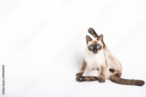 a cat stares into the camera in the middle of cleaning his crotch Canvas Print