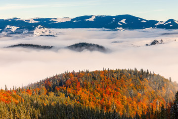 Plakat The sea of fog with forests as foreground