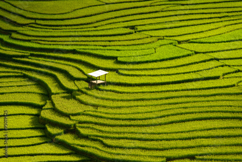 Poster Rijstvelden Beautiful landscape Green Terraced Rice Field in Mu cang chai, V