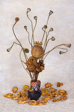 Autumn Still Life Of Dried Pod...