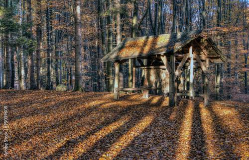 Jesienny Bukowy Las i Paśnik