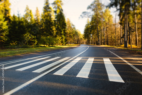 crosswalk on an empty forest road Fototapet