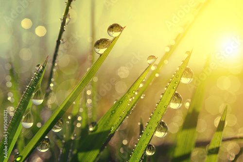 Spoed Foto op Canvas Natuur Fresh grass with dew drops at sunrise. Nature Background
