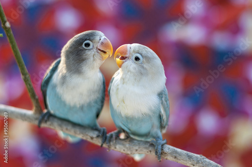 Deurstickers Vogel Love birds with colorful background