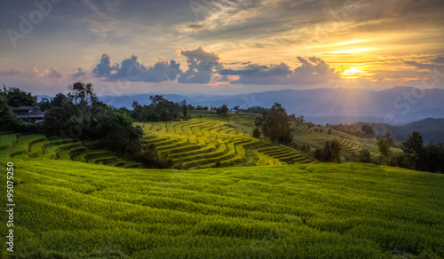 Garden Poster Rice fields Golden rice of rice terraces. Mae Chaem District, Chiang Mai Province