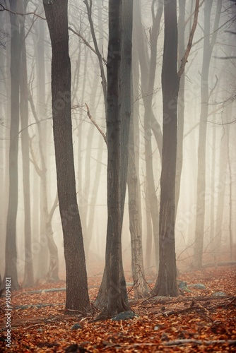 Wall Murals Forest Autumn day in the enchanted forest