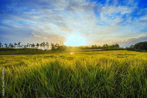 Foto auf Gartenposter Landschappen grass and sunlight