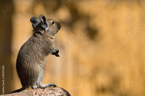 Fotografia, Obraz rat on its hind legs