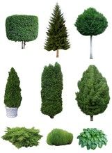 Set Of Trees And Shrubs. Set O...