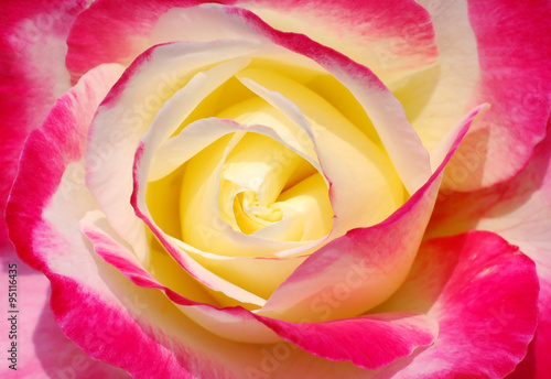 Fototapeta Beautiful heart of a colorful rose obraz na płótnie