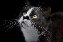 Cat Muzzle With White Whiskers Close-up On Black Background
