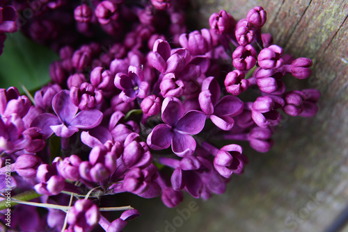 Spoed Foto op Canvas Lilac branch of lilac