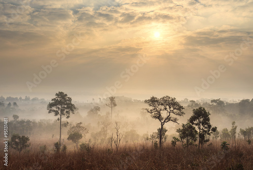 Obrazy na płótnie Canvas Thailand savanna landscape at sunrise