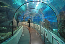 BARCELONA, CATALONIA, SPAIN - DECEMBER 14, 2011: Transparent Tunnel In Barcelona Aquarium In Barcelona, Spain