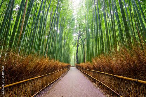 Foto op Canvas Bamboo Path to bamboo forest, Arashiyama, Kyoto, Japan.