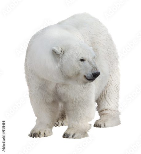 Tuinposter Ijsbeer isolated on white large polar bear