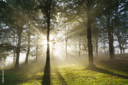 morning sun rays on forest