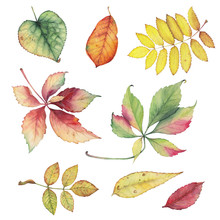 Set Of Colorful Autumn Leaves. Bright Color Watercolor Pattern. Hand Drawn Botanical Illustration.