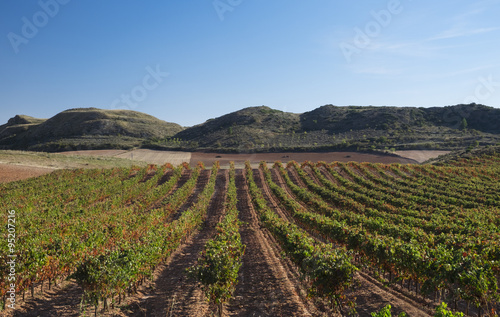 Vineyards in Barbarin, Navarre