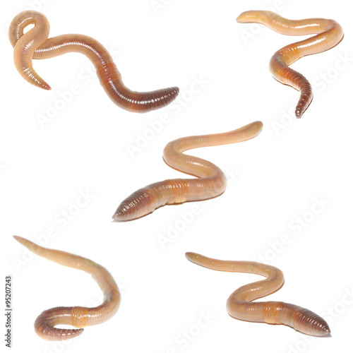 animal earthworm set collection isolated on white